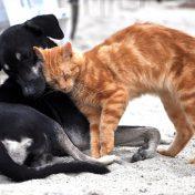 Alimentación saludable de perros y gatos con dingonatura